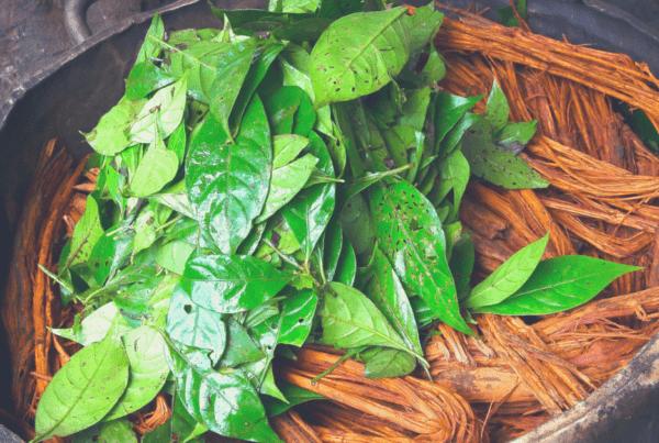 Plant Medicine Ayahuasca